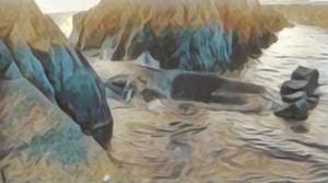 熊本 天草 マッコウクジラ 動画 画像 大地震 前兆 前触れ