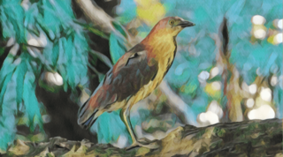 ミゾゴイ 生息地 鳴き声 とは 絶滅危惧種 生態 なぜ